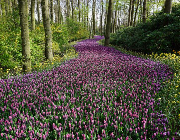 Afbeelding voor Een nieuwe lente en een nieuw geluid